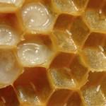 Uso de la Miel en el Hogar