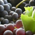 Usos de las Uvas en la Belleza